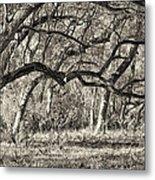 Bent Trees Sepia Toned Metal Print
