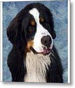 Bernese Mountain Dog 11 Metal Print