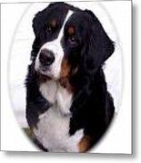 Bernese Mountain Dog 443 Metal Print