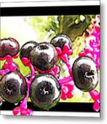Berry Burst   Poke Berries Metal Print