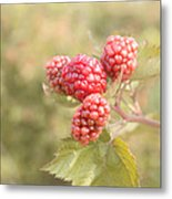 Berry Good Metal Print by Kim Hojnacki