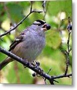 Berry Hungry Bird Metal Print