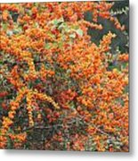Berry Orange Metal Print