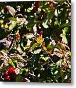 Berry Picking Metal Print