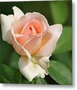 Betty White Rose Metal Print