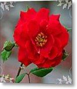 Betty's Red Rose Metal Print