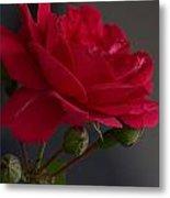 Betty's Red Rose II  Metal Print