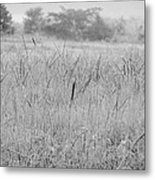 Between Mountains And Meadows Metal Print