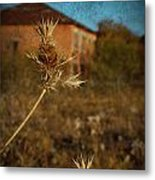 Beyond The Thorns Metal Print