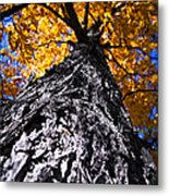 Big Autumn Tree In Fall Park Metal Print
