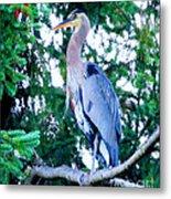 Big Bird - Great Blue Heron Metal Print