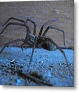 Big Brown Spider Metal Print