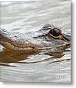 Big Eyes Baby Gator Metal Print