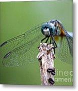 Big Eyes Blue Dragonfly Metal Print