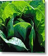Big Green Cabbage Metal Print