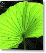 Big Leaf Metal Print