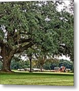 Big Oak And The Tractors Metal Print