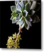 Big Sedum Metal Print