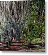 Big Tree Metal Print