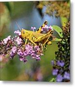 Big Yellow Grasshopper Metal Print
