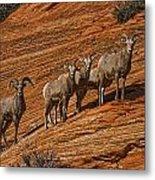 Bighorn Sheep, Zion National Park, Utah Metal Print