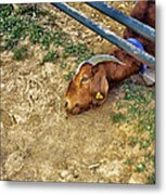 Billy's Escape Metal Print