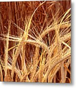 Bioengineered Barley Metal Print