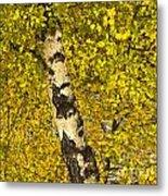 Birch Forest In Finland Metal Print