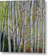 Birch Forest Metal Print