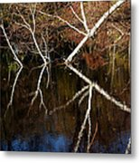 Birch Reflections Metal Print