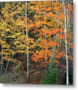 Birch Trees And More Metal Print