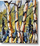 Birches Aglow By Prankearts Metal Print