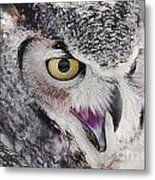 Bird 4 Metal Print
