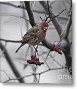Bird And Berry 3 Metal Print