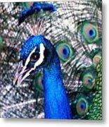 Bird Beauty Metal Print