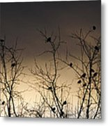 Bird Cove Metal Print