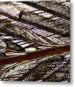 Bird Feather Metal Print