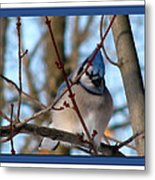 Bird Of Blue Metal Print