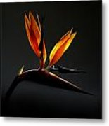 Bird Of Paradise 3 Metal Print