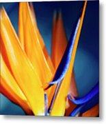 Bird Of Paradise (strelitzia Reginae) Metal Print
