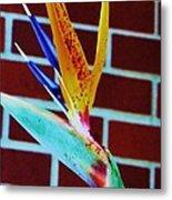Bird Of Paradise Metal Print by Todd Sherlock