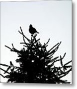 Bird Silhouette  Metal Print