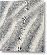 Bird Tracks Metal Print