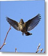 Bird Vs Bug Metal Print