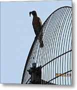 Bird With A Catch Metal Print
