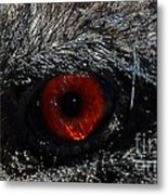 Bird's Eye Metal Print