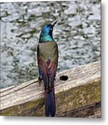 Birds Of A Feather Don't.. Metal Print