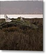 Birds Of Bc - No.15 - Snowy Owl - Bubo Scandiacus Metal Print
