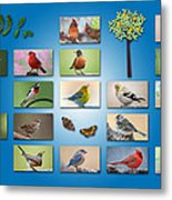 Birds Of The Neighborhood Metal Print