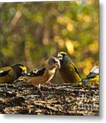 Birds Of Yellow Metal Print
